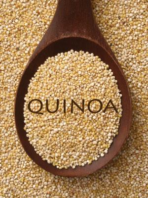 dogs-and-quinoa