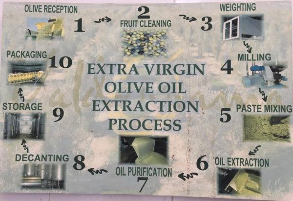 proceso-de-extracción-de-los-aceites-valderrama